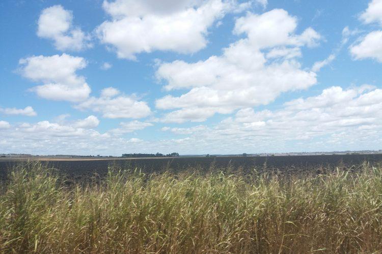 warwick sunflower field